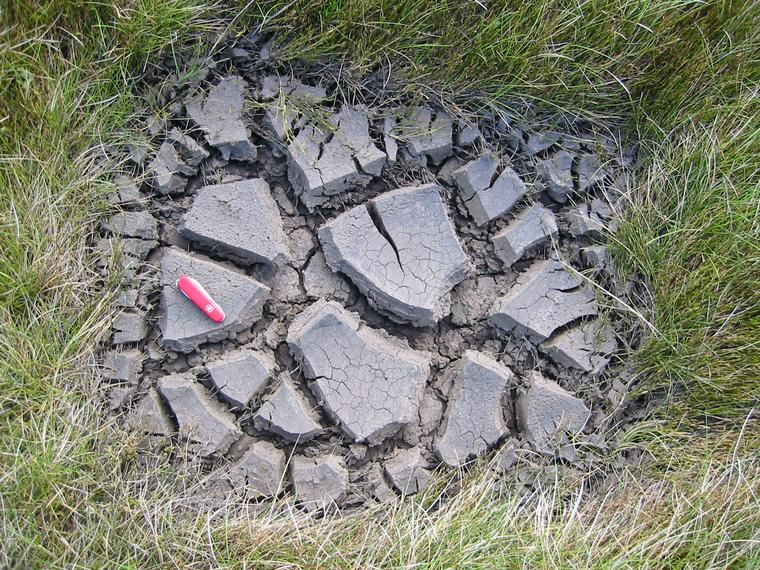 mud-cracks.jpg